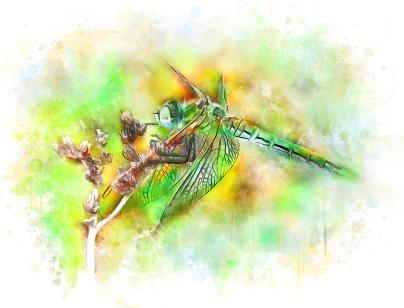 Reseña libélula acuarelas